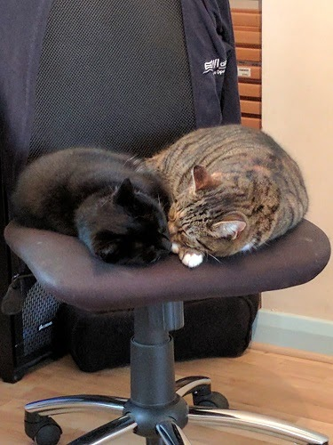 A black cat and a tabby cat both curled up and snoozing together on an office chair