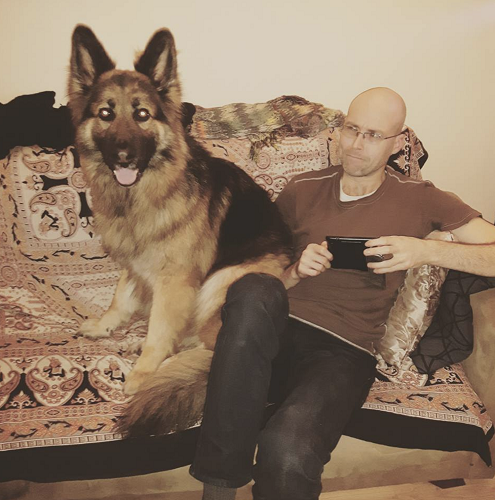 A man on a couch next to a very large German Shepherd